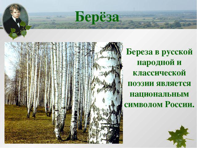 Береза в русской народной и классической поэзии является национальным символо...