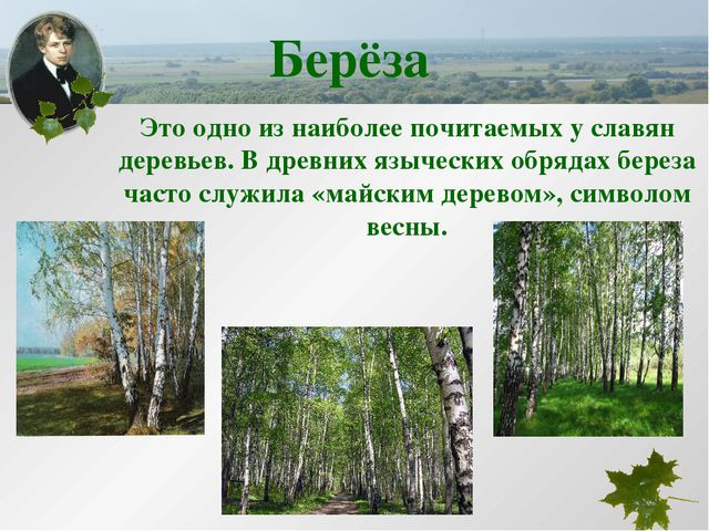 Это одно из наиболее почитаемых у славян деревьев. В древних языческих обряда...