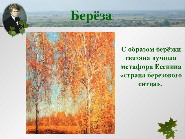 С образом берёзки связана лучшая метафора Есенина «страна березового ситца»....