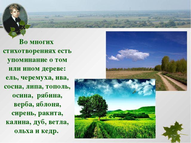 Во многих стихотворениях есть упоминание о том или ином дереве: ель, черемуха...
