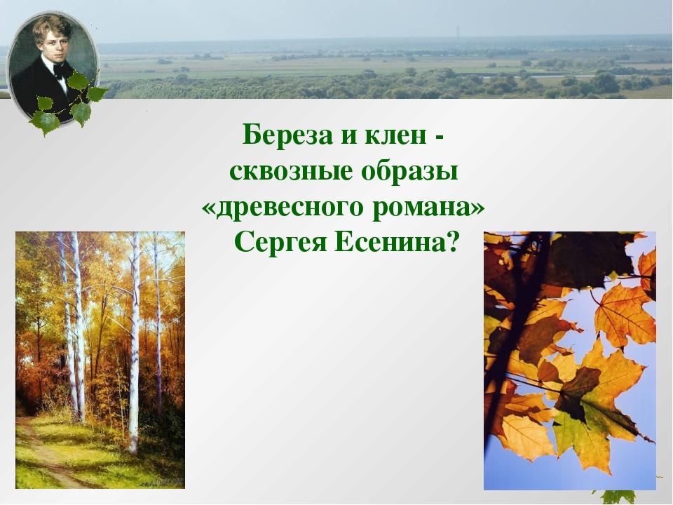 Береза и клен - сквозные образы «древесного романа» Сергея Есенина?