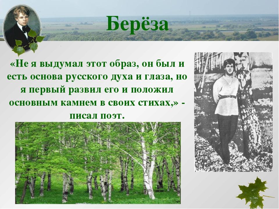 Берёза «Не я выдумал этот образ, он был и есть основа русского духа и глаза,...
