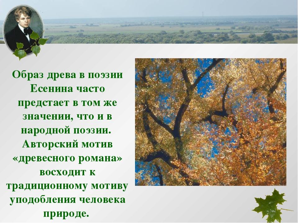 Образ древа в поэзии Есенина часто предстает в том же значении, что и в народ...