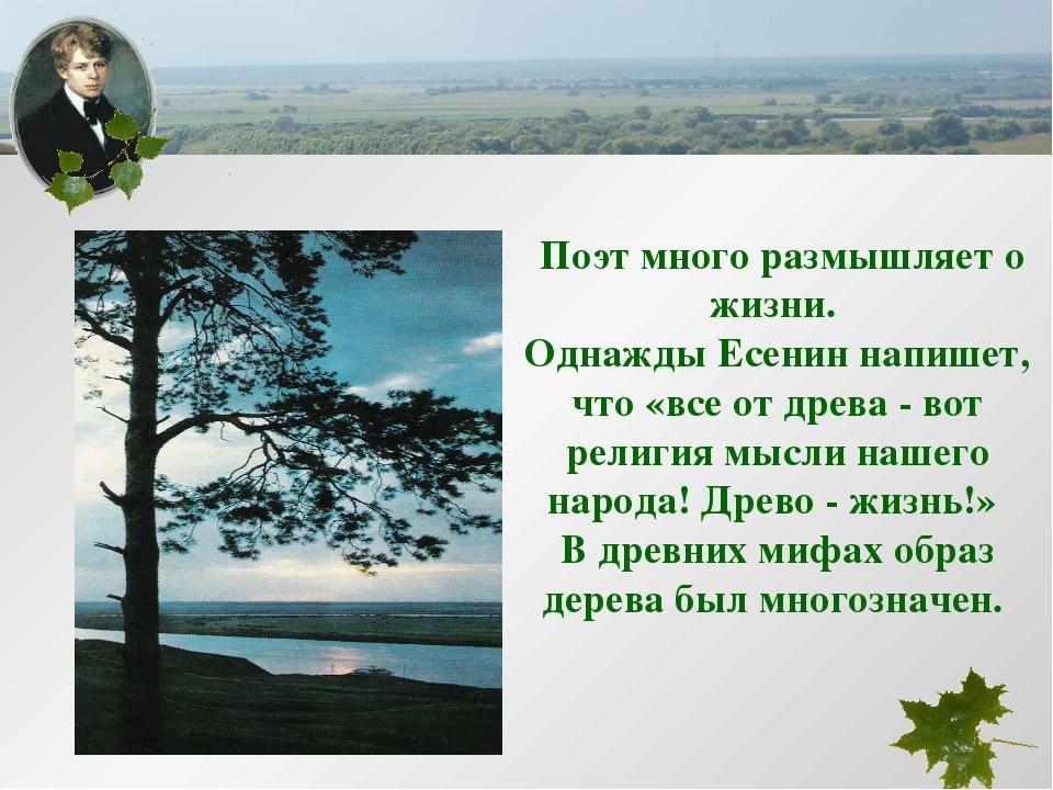 Поэт много размышляет о жизни. Однажды Есенин напишет, что «все от древа - в...