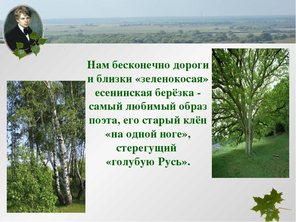 Нам бесконечно дороги и близки «зеленокосая» есенинская берёзка - самый любим...