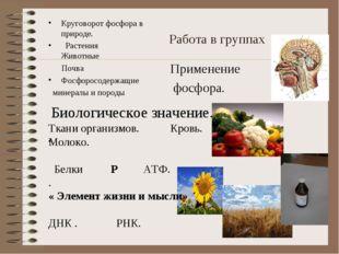 Работа в группах Применение фосфора. Круговорот фосфора в природе. Растения