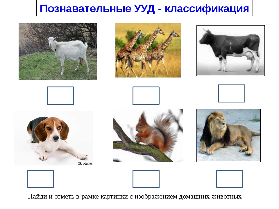 Познавательные УУД - классификация Найди и отметь в рамке картинки с изображ...