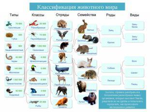 Зоологи, стремясь разобраться в бесконечном разнообразии живых организмов, ко