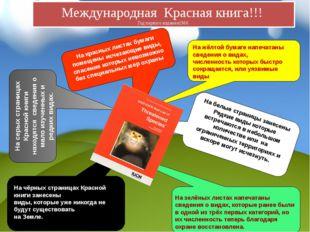 На чёрных страницах Красной книги занесены виды, которые уже никогда не буду
