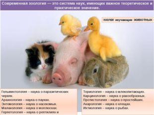 Териология – наука о млекопитающих. Карцинология – наука о ракообразных. Прот