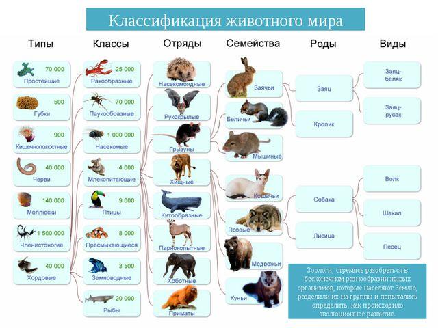 Зоологи, стремясь разобраться в бесконечном разнообразии живых организмов, ко...