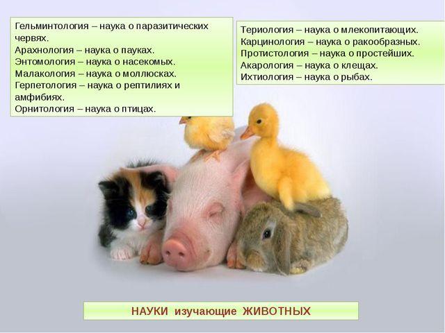 Териология – наука о млекопитающих. Карцинология – наука о ракообразных. Прот...
