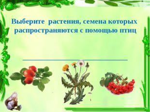 Выберите растения, семена которых распространяются с помощью птиц ___________