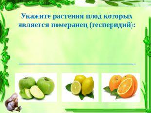 Укажите растения плод которых является померанец (гесперидий): ______________
