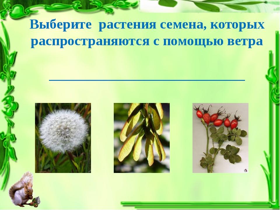 Выберите растения семена, которых распространяются с помощью ветра __________...