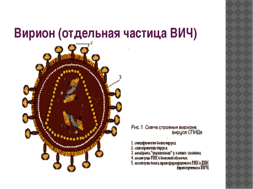 Вирион (отдельная частица ВИЧ)