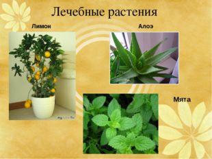 Лечебные растения Лимон Мята Алоэ