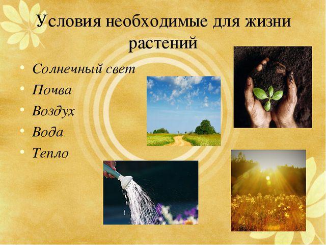 Условия необходимые для жизни растений Солнечный свет Почва Воздух Вода Тепло