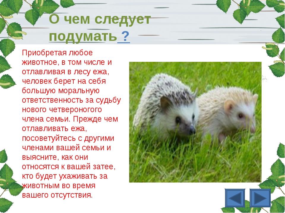 Приобретая любое животное, в том числе и отлавливая в лесу ежа, человек берет...