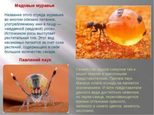 Павлиний паук Медовые муравьи Название этого отряда муравьев во многом обязан