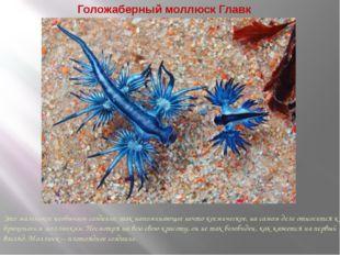 Голожаберный моллюск Главк Это маленькое необычное создание, так напоминающее