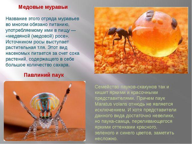 Павлиний паук Медовые муравьи Название этого отряда муравьев во многом обязан...