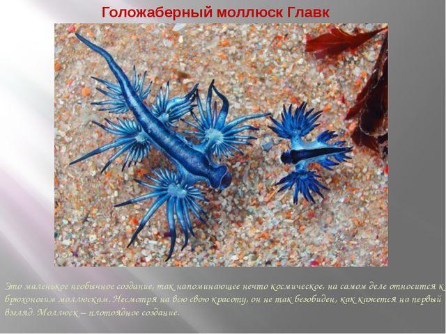 Голожаберный моллюск Главк Это маленькое необычное создание, так напоминающее...