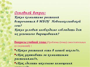 Основной вопрос: Какие комнатные растения встречаются в МБОУ Новониколаевской