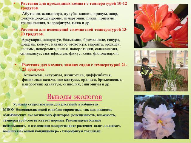 Растения для прохладных комнат с температурой 10-12 градусов. Абутилон, аспид...