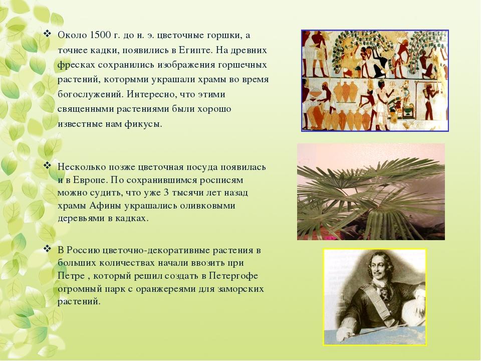 Около 1500 г. до н. э. цветочные горшки, а точнее кадки, появились в Египте....