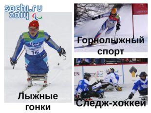 Лыжные гонки Горнолыжный спорт Следж-хоккей