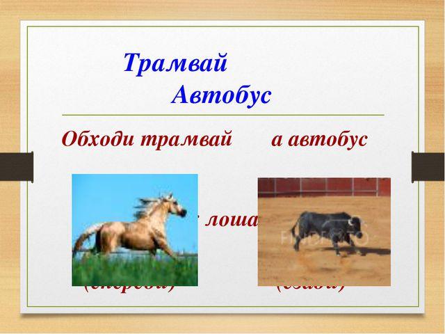 Трамвай Автобус Обходи трамвай а автобус как лошадь, как быка. (спереди) (сз...
