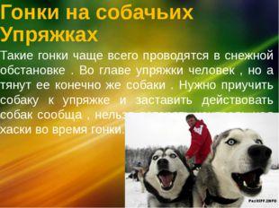 Гонки на собачьих Упряжках Такие гонки чаще всего проводятся в снежной обстан