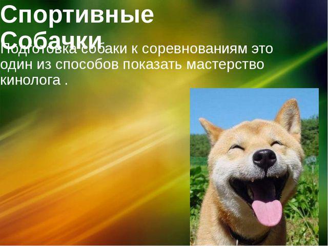 Спортивные Собачки Подготовка собаки к соревнованиям это один из способов пок...