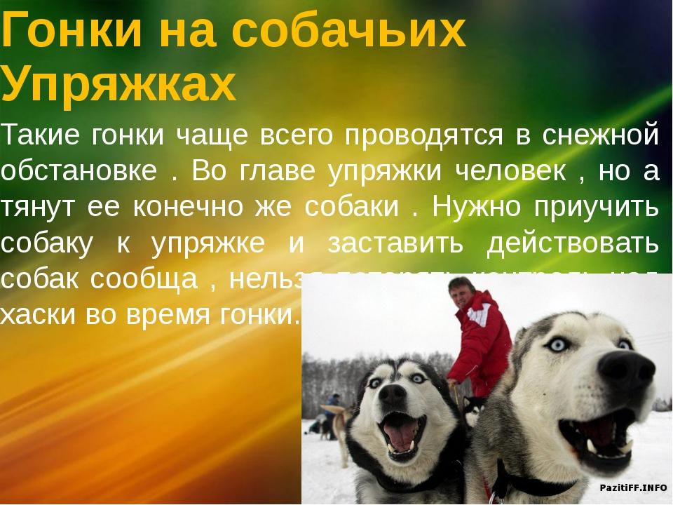 Гонки на собачьих Упряжках Такие гонки чаще всего проводятся в снежной обстан...