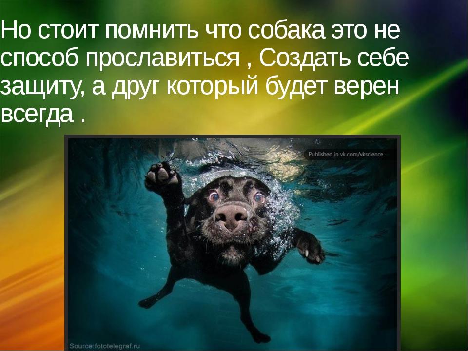 Но стоит помнить что собака это не способ прославиться , Создать себе защиту,...