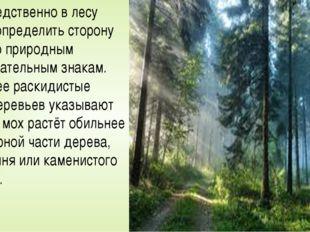 Непосредственно в лесу можно определить сторону света по природным опознавате