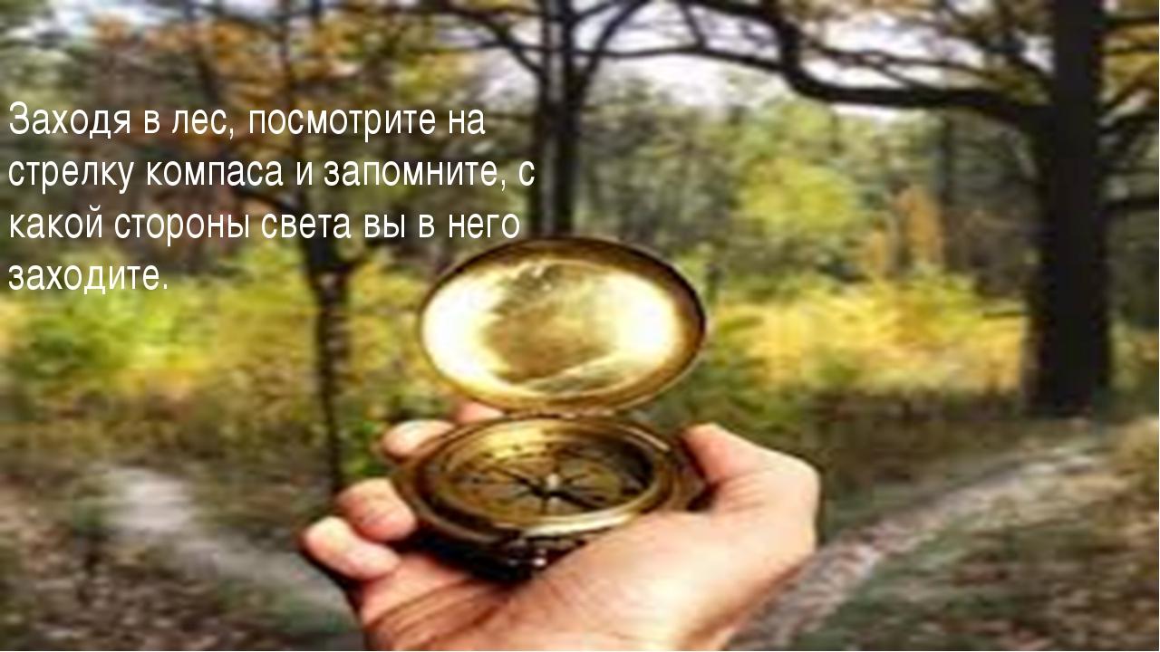 Заходя в лес, посмотрите на стрелку компаса и запомните, с какой стороны свет...