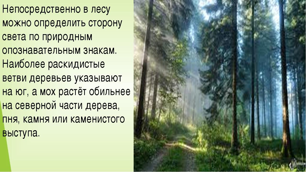 Непосредственно в лесу можно определить сторону света по природным опознавате...