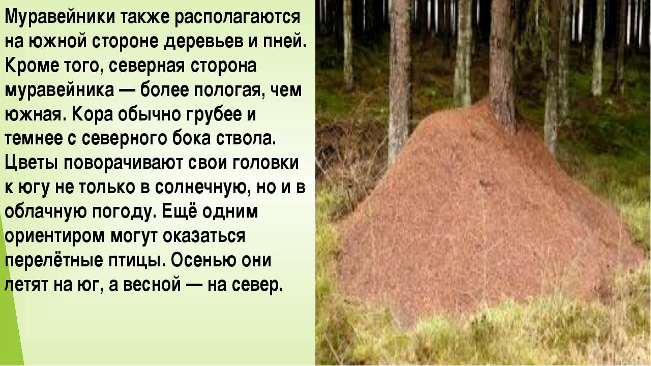Муравейники также располагаются на южной стороне деревьев и пней. Кроме того,...
