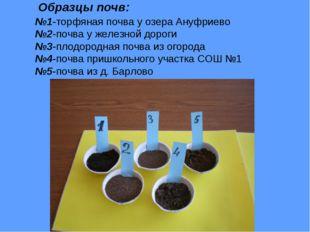 Образцы почв: №1-торфяная почва у озера Ануфриево №2-почва у железной дороги