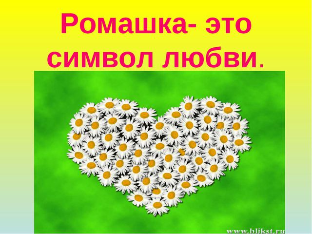 Ромашка- это символ любви.