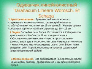 Одуванчик линейнолистный Tarahacum Lineare Worosch. Et Schaqa 1.Краткое описа