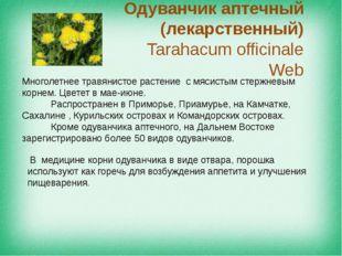 Одуванчик аптечный (лекарственный) Tarahacum officinale Web Многолетнее травя