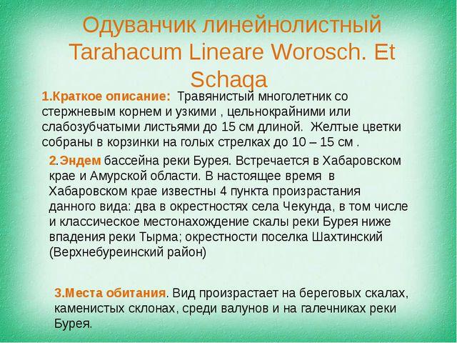 Одуванчик линейнолистный Tarahacum Lineare Worosch. Et Schaqa 1.Краткое описа...