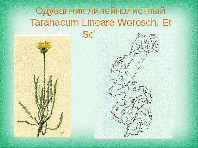 Одуванчик линейнолистный Tarahacum Lineare Worosch. Et Schaqa