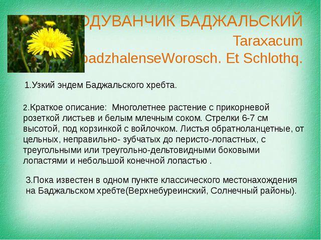 ОДУВАНЧИК БАДЖАЛЬСКИЙ Taraxacum badzhalenseWorosch. Et Schlothq. Узкий эндем...