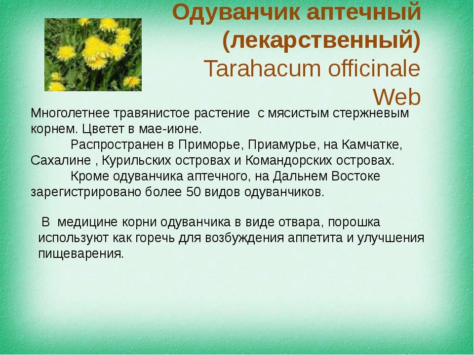 Одуванчик аптечный (лекарственный) Tarahacum officinale Web Многолетнее травя...