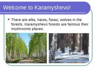 Welcome to Karamyshevo! There are elks, hares, foxes, wolves in the forests.