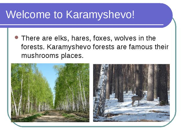 Welcome to Karamyshevo! There are elks, hares, foxes, wolves in the forests....